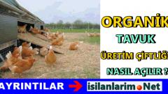 Organik Tavuk Çiftliği Kurun Siz Para Kazanın