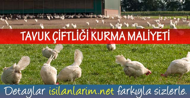 Tavuk Çiftliği Kurma Maliyeti Ne Kadardır?