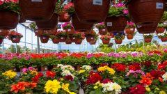 Çiçekçi Dükkanı Açmak: Ustalık Belgesi Gerekli mi? Dizayn ve Dekorasyon